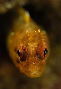 starknakedfish.com