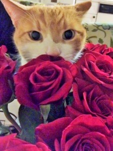 And here is a giant kitten sticking his sweet face in roses.