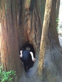 trees5c